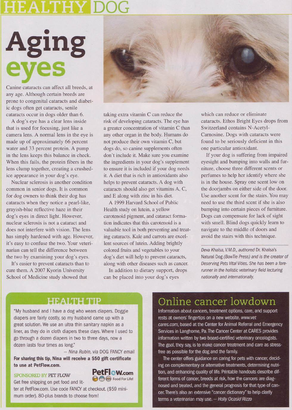 Do Eye Drops For Dog Cataracts Work